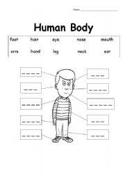 The Human Body Esl Worksheet By Supergun812