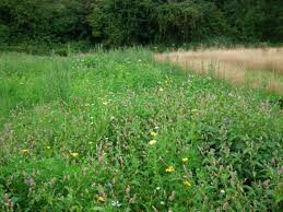 Grass Couch Weed Control Nettle Dock Dandelion Bindweed Couch Etc