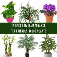 pet friendly house plants