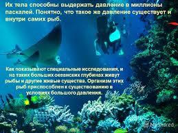 Географія Світовий океан Реферат ru Реферат на тему глибини моря