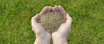 Grass Seed Germination Chart When To Plant Tall Fescue Grass Seed