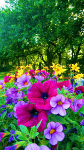 colored pictures of flowers. Interesting Pictures Bright Colored Flowers For The Garden On Pictures Of O