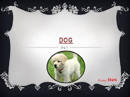 an essay on dog for kids in english language  an essay on dog for kids in english language