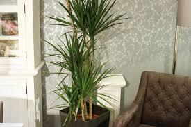 Luftreinigende Pflanzen Hornbach
