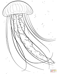 Jelly Fish Coloring Page From Jellyfish