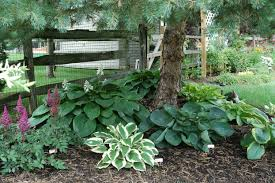 Small Picture Hostas under pine tree Garden Landscape Pinterest Pine tree
