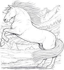 Cavallo 6 Disegni Da Colorare Per Adulti Disegni Da Colorare All Con