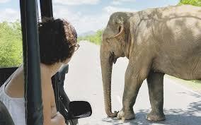 motorcycle insurance elephant famous 2017