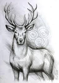 Deer Drawings In Pencil Art Deer Rough Sketch In Pencil