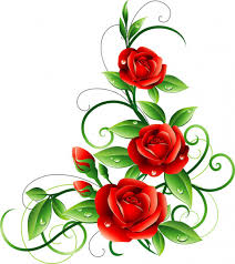 red roses backgrounds