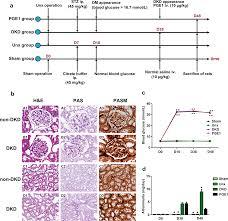 Microalbumin Levels Chart Prostaglandin E1 Attenuates High Glucose Induced Apoptosis