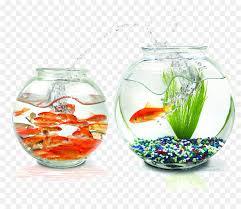 Goldfish Praneetha Fish Aquariums Wallpaper Circular Tank Png