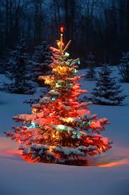 christmas lights outdoor trees warisan lighting. Christmas Tree With Lights / Carson Ganci Outdoor Trees Warisan Lighting S
