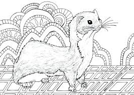 Ferret Coloring Pages Back To The Coloring Pages Index Cute Ferret