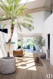 ... Incredible Identify Houseplant Leaf Shape Interior Design Indoor Trees  For Best Large House Plants ...