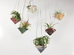 best hanging air plant how to care for the lovely that adorn your home planter terrarium