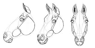 how to draw horses head 28