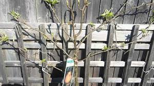 What Is Best Time Of Year To Take Fruit Tree Cuttings  Home When Do You Plant Fruit Trees