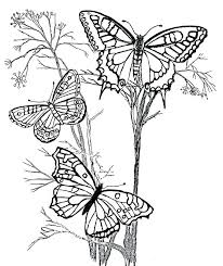Free Coloring Pages Of Butterflies Cartoon Flower Coloring Pages For