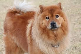 Cute hairy fluffy dogs