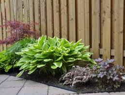 shade plants for zone 5 growing shade