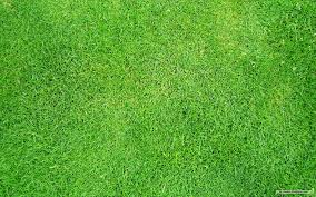 Grass Texture (Shona Brinkerhoff - HD Wallpapers
