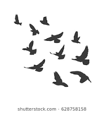 bird flying silhouette. Beautiful Silhouette Silhouette Flying Birds On White Background Pigeons Fly Illustration Inside Bird Flying