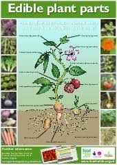 Edible Plant Parts Teacher Guide Organic Gardening