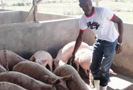 Pig Farming Business Plan Home Based Import Export Business India Fast Food Business Plan In