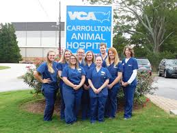 vca animal hospital recognizes staff for national veterinary technician week