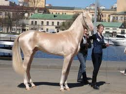 most beautiful horse breed in the world. Unique Horse Breeds Throughout Most Beautiful Breed In The World