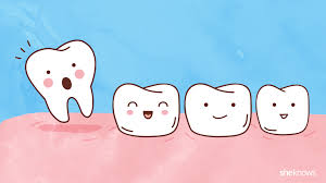 A Timeline For Your Childs Tooth Loss Sheknows