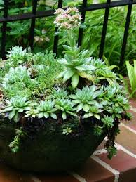 Succulent Garden Designs Simple How To Start Growing A Healthy Succulent Garden Gardening Dallas