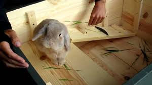 home made bunny cage