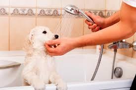 dog hair clogged bathtub ideas