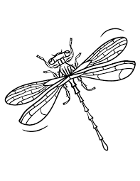 Small Picture Free Dragonfly Coloring Page