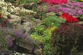 Small Picture Build A Rock Garden Fabulous I Had To Clean Some Of The Creekbed