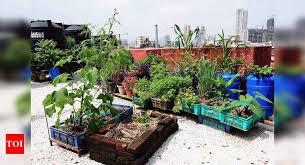 quarantine gardening after lockdown