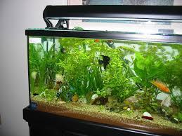 fish tank lighting ideas. Aquarium Lighting Fish Tank Ideas