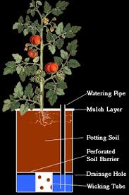 self watering containers 22 comments share this post today