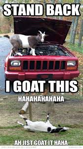 Goat Quotes Beauteous Goat Quotes By On Got Your Goat The Two Theories Of This Phrases