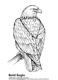Small Picture picture Bald Eagle Coloring Page 79 For Download Coloring Pages