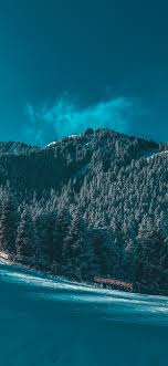 Snow Forest Nature Wallpaper ...