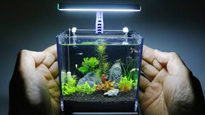 Best Nano Aquariums 5 Nano Tanks Reviews 2019