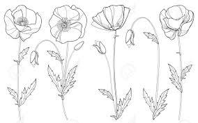 枠のケシの花セット芽黒白い背景で隔離の葉等高線スタイルの夏デザインと塗り絵のケシの実の花の要素
