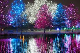 trees decorated with pink blue and silver lights reflecting off a lake