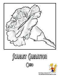 Small Picture Ohio State Flower Coloring Page Scarlet Carnation USA Coloring