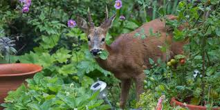 deer resistant trees and shrubs