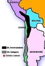 Chinchilla New World Encyclopedia