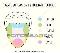 Taste Buds Colored Tongue Chart Clipart K53807803 Fotosearch